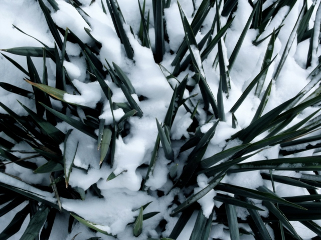 Snowy green plant