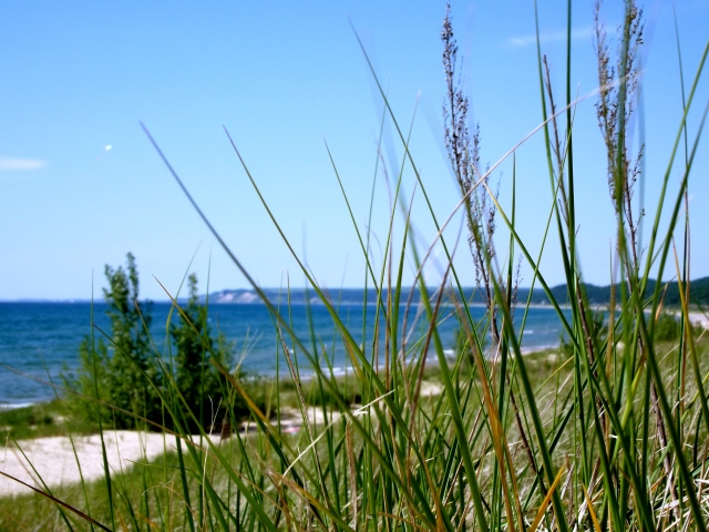 dune grass and the beach