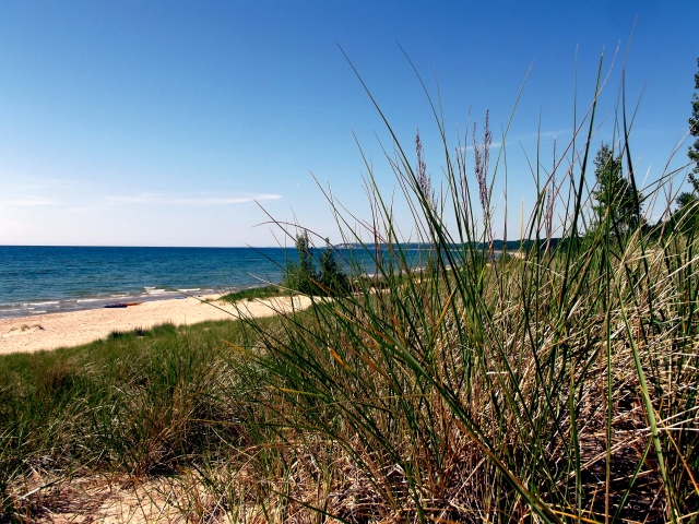 Dune GRass with Beach