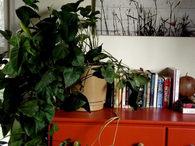 orange with plant