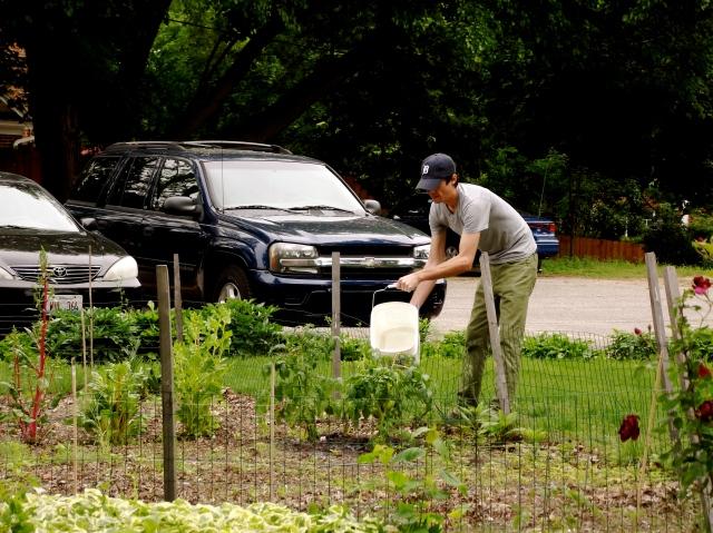 Sean Farming our Tomatoes