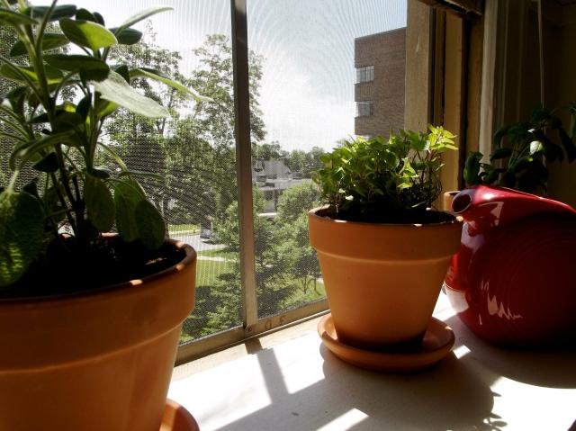 spice plants on the shelf