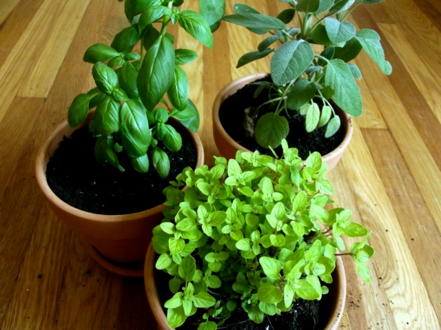 spice plants planted