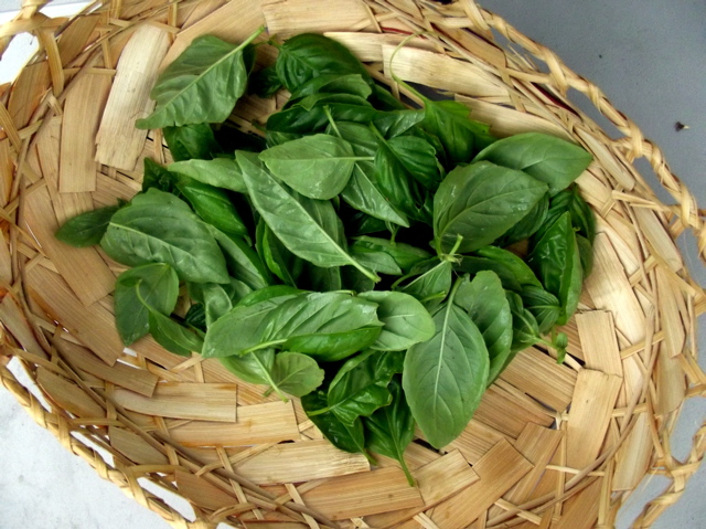 basil in the basket