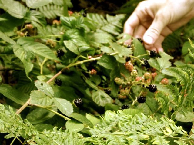 hand blackberry