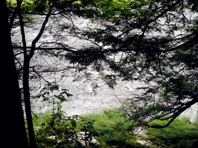 river through the trees