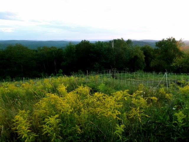 yellow flowers in field
